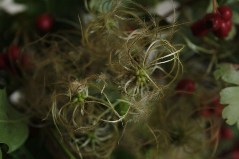 bouquet de maiee