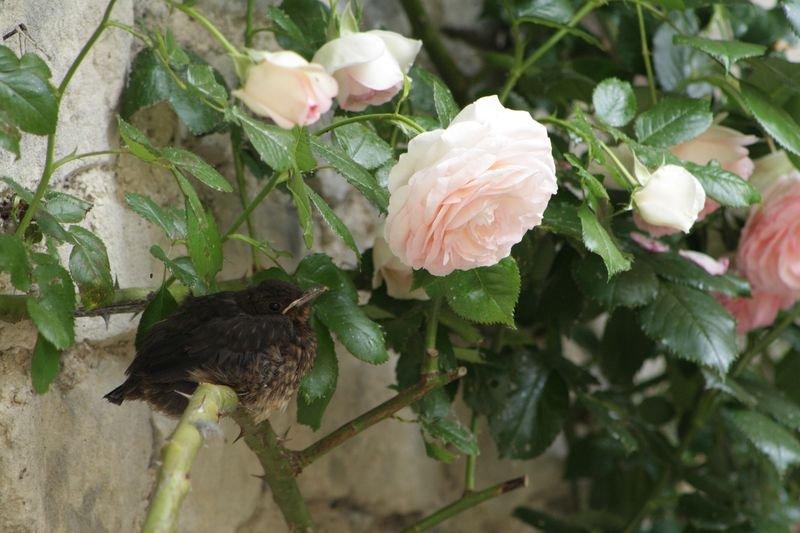 fleur parmi les fleurs